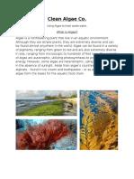 clean algae co