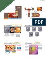 Embriologia Da Face e Cavidade Oral