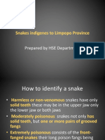 Limpopo Snakes