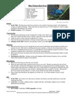 BluePoisonDartFrog Nature Habitat