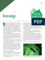 Earwigs PDF