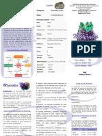 Isabel PDF