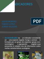 BIOINDICADORES EXPO.pptx