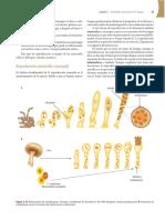Micologia Medica Basica - Alexfaz - 4ta Edicion - McGrawHill 37