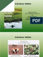 3.Eco Individuo