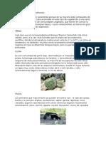 Bosque Tropical Espinoso