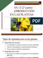 Plantas dispositivas