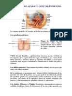 ANATONOMIA DEL APARATO GENITAL FEMENINO Trabajo de Lesiones de Parto de Dra Autista