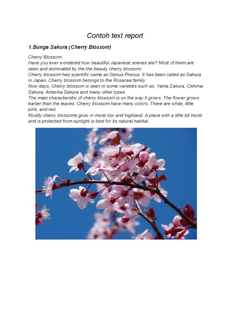 Contoh Text Report Orchidaceae Gardening