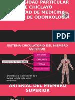 Anatomia Circulatorio