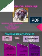fisiologia del lenguaje