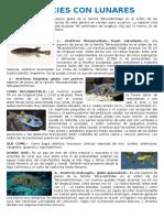 caracteristicas de los peces del mar peruano