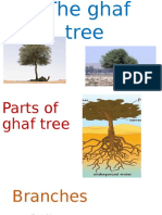 the ghaf tree