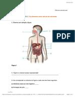 Sistema Digestivo Órgãos