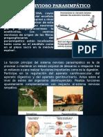 EXPO-DE-HISTO.pptx