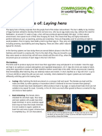 The Life of Laying Hens