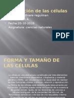 Clasificación de Las Células Baithiare Alejandra Raguiman