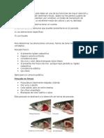 Informes Pescado y Huevo