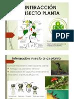 (106747)Insecto Planta Insecto Insecto