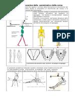 Analisi Biomeccanica Della Corsa e Della Camminata