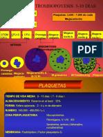 PLAQUETAS-HEMOSTASIA