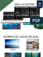 Ecosistemas Agua Salada