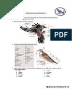 'myslide.es_aves-especialidad-desarrollada.pdf