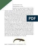 Deskripsi Morfologi Ikan Gabus