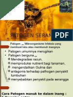 Patogen serangga