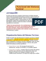 002 Anatomía Funcional del Sistema Nervioso Central.docx