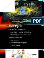 Cell Cycle & Cancer