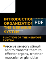 Introduction and Organization of the Nervous System