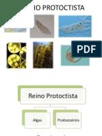 protozoários2