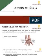 Articulación Muñeca
