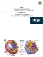 membrana+plasmatica