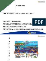 Diapositivas Animales Acuaticos-ULTIMO