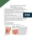 Sistema Digestivo Completo (1)
