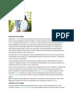 Caracteristicas de Las Etapas Del Desarrollo Del Feto