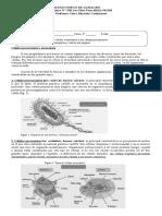 Células Procarionte y Eucarionte