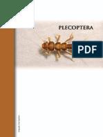 10 Gutierrez Plecoptera