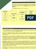 Anatomy 15.pdf