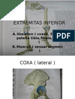 Anat Extremitas Inferior