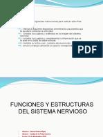 Funciones y Organos Del Sistema Nervioso Gabrielorubiomejia