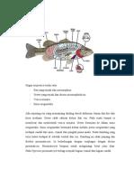 Sistem Ekskresi Osmoregulasi Pisces Dwi