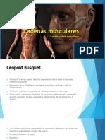 Cadena Musculares