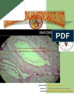 informe H3.pdf