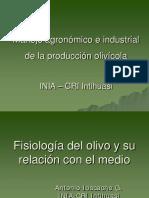 Fisiologia Del Olivo