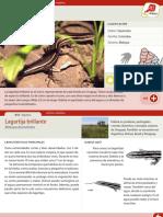 lagartija-brillante.pdf