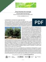 Otras Fuentes de Energía, La FotosíntesisOK