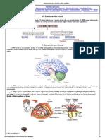 Sistema Nervoso_ Divisão e SNC Encéfalo